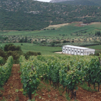 Nemea winery